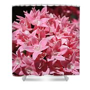 Pink Pentas Beauties Shower Curtain