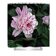 Pink Peone Shower Curtain