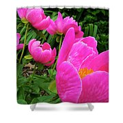 Pink Peonies Shower Curtain