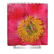Pink Peony Flower Fine Art  Shower Curtain