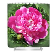 Pink Peony On Green Shower Curtain
