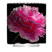 Pink Peony On A Black Background Shower Curtain