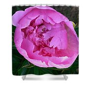 Pink Peoony In Bloom Shower Curtain