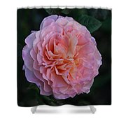 Pink Perfection Shower Curtain