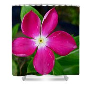 Pink Periwinkle Flower 1 Shower Curtain