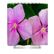 Pink Periwinkle Flower Shower Curtain