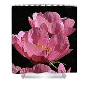 Pink Perspective 0552 Shower Curtain