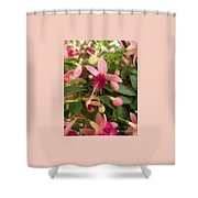 Pink Petalled Fuchsia Blooms              May         Indiana Shower Curtain