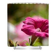 Pink Petunia Shower Curtain