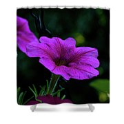 Pink Petunia, Dusk, Hunter Hill, Hagerstown, Maryland, July 25,  Shower Curtain