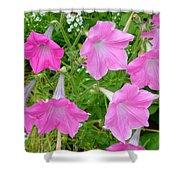 Pink Petunia Flower 9 Shower Curtain