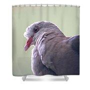 Pink Pigeon Nesoenas Mayeri Shower Curtain