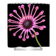Pink Pinwheel Shower Curtain