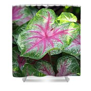 Pink Plants Shower Curtain