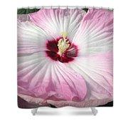 Pink Platter Shower Curtain
