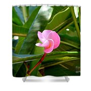 Pink Plumeria In Bloom Shower Curtain