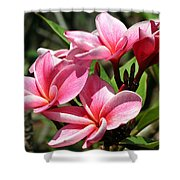 Pink Plumeria Shower Curtain