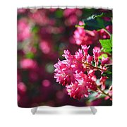 Pink Profusion 3 Shower Curtain