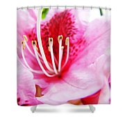 Pink Rhodie Flowers Art Prints Canvas Rhododendrons Baslee Troutman Shower Curtain