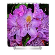 Pink Rhododendron 003 Shower Curtain