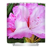Pink Rhododendron Art Print Floral Canvas Rhodies Baslee Troutman Shower Curtain