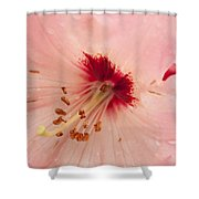 Pink Rhododendron Shower Curtain