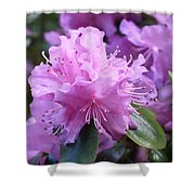 Light Purple Rhododendron With Leaves Shower Curtain