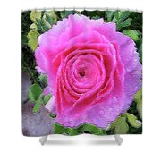 Pink Rose #064 Shower Curtain