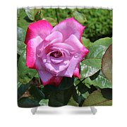 Pink Rose 1 Shower Curtain