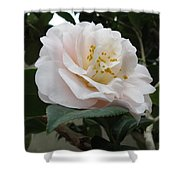 Pink Rose 2 Shower Curtain