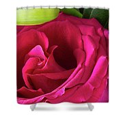 Pink Rose And Bud Close-up Shower Curtain