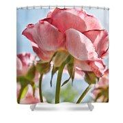 Pink Rose Back Light Shower Curtain
