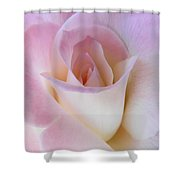 Pink Rose Beginnings Shower Curtain