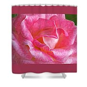 Pink Rose Close Up Shower Curtain