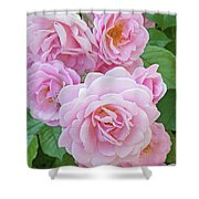 Pink Rose Cluster II Shower Curtain