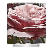 Pink Rose Faded Shower Curtain