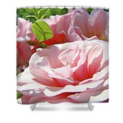 Pink Rose Flower Garden Art Prints Pastel Pink Roses Baslee Troutman Shower Curtain