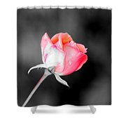 The October Rose    Shower Curtain