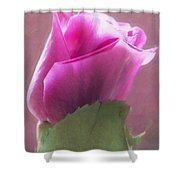 Pink Rose In Light Shower Curtain