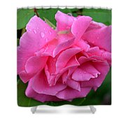 Pink Rose In Profile Shower Curtain