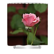 Pink Rose In The Garden Shower Curtain