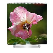Pink Rose In The Rain 2 Shower Curtain