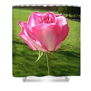 Pink Rose In The Sunlight Shower Curtain