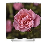 Pink Rose Instagram Shower Curtain