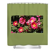 Pink Rose Of Sharon Blooms      Spring     Indiana Shower Curtain