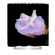 Pink Rose Of Sharon Glowing On A Black Background Shower Curtain