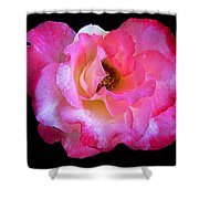 Pink Rose On Black 3 Shower Curtain