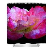 Pink Rose On Black 4 Shower Curtain