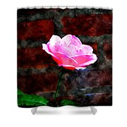 Pink Rose On Red Brick Wall Shower Curtain