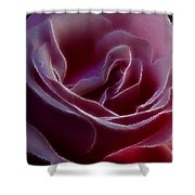 Pink Rose Portrait Shower Curtain